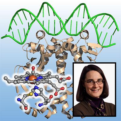 Judith Burstyn science profile